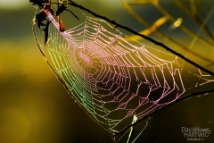 Color of a Web- Lindenhurst IL