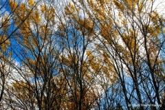Fingers of Autumn