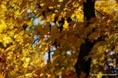 Leaves of Serenity