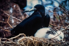A Watchful Eye - Galapagos Islands