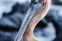 Big-Mouth -Galapagos Islands