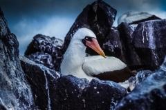 On My Throne - Galapagos Islands