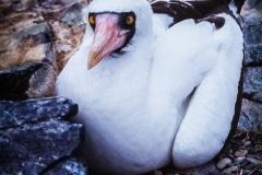 Vivid Eyes - Galapagos Islands