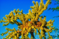 Desert Life- Oro Valley AZ