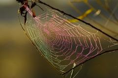 Colors of a Web - Lindenhurst, IL.