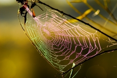 Colors of a Web - Lindenhurst IL.