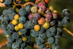 Wine Inception - Melrose, MN.