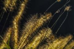 Details in Grass - Glencoe IL.