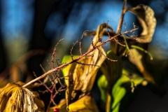 Naked Branch - Glencoe IL.