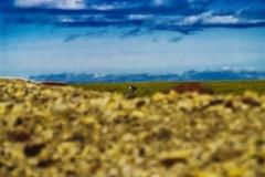 Hidden Caribou- High Artic