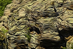 Abstract-at-Shawnee-Shawnee-National-Forest-IL-71457-Edit