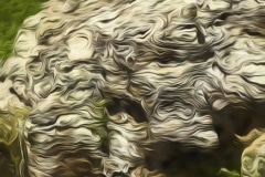 Abstract-at-Shawnee-Shawnee-National-Forest-IL-7157-Edit.2jpeg