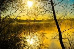 A Golden Mist - Lindenhurst IL.