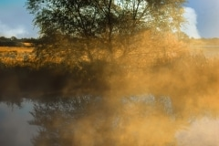 A Reflection in the Mist - Lindenhurst IL.