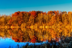 A Reflection of Autumn - Elk Grove Village IL.