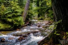 Backwoods Creek - Priest Lake ID.