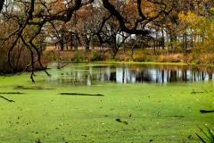 Hidden Algae - Barrington, IL.