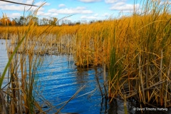 Wetlands in Autumn - Lindenhurst IL.