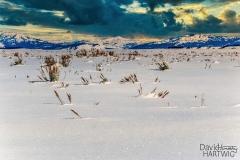 Sparkling Snow -