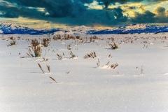 Sparkling Snow -Teton N.P. Jackson, WY.