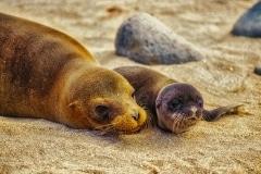 Family - Galapagos Islands