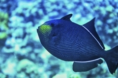 Yellow Nose - Grand Cayman Island