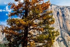 Hidden Cliff - Yosemite CA.