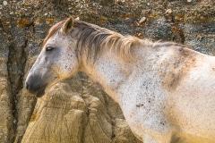 Sleeping Mustang - Roosevelt N.P. ND.